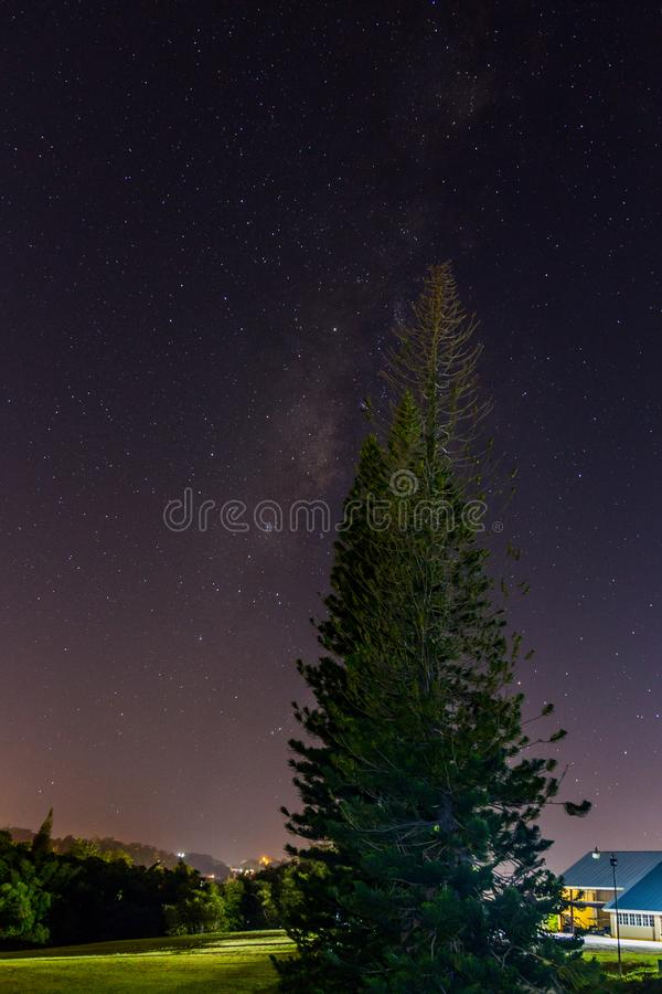 Noite estrelado e pinheiros fotografia de stock