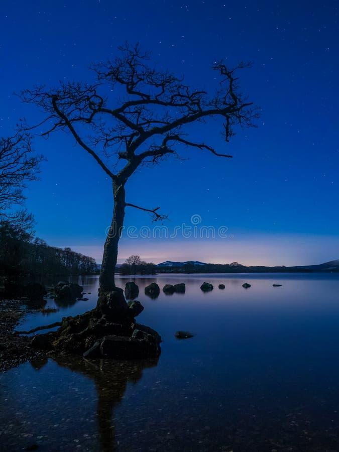 Noite estrelado na árvore solitária em Loch Lomond imagens de stock royalty free