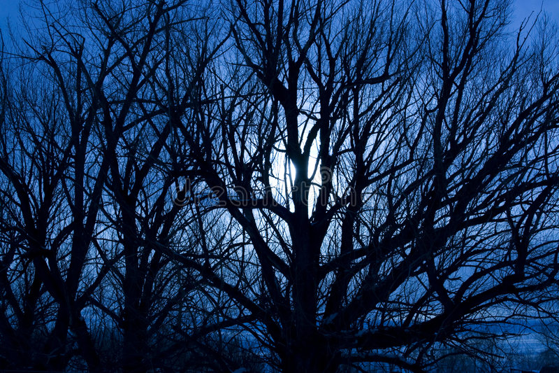 Noite Moonlit assustador foto de stock