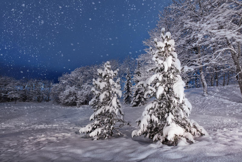 Noite nevado do inverno fotos de stock