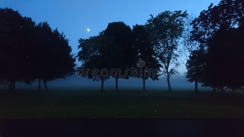 Noite nevoenta com a lua através das árvores no campo fotos de stock
