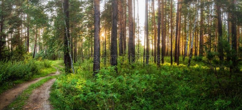 Noite nevoenta em uma floresta do pinho com uma estrada de terra, Rússia da paisagem do verão, Ural fotos de stock royalty free