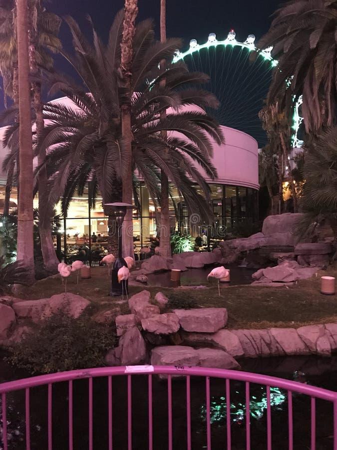Noite no flamingo foto de stock
