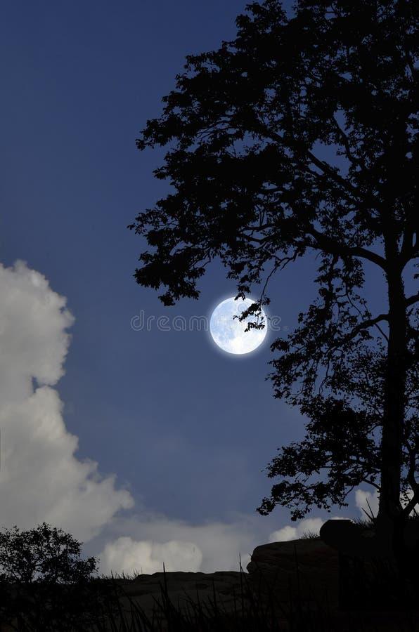 Noite romântica da Lua cheia sobre o penhasco fotografia de stock royalty free
