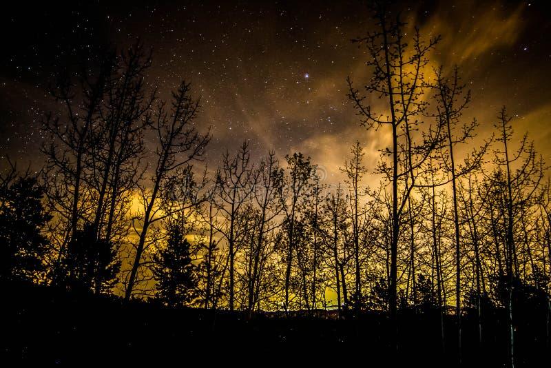 Noite sempre-verde do inverno foto de stock