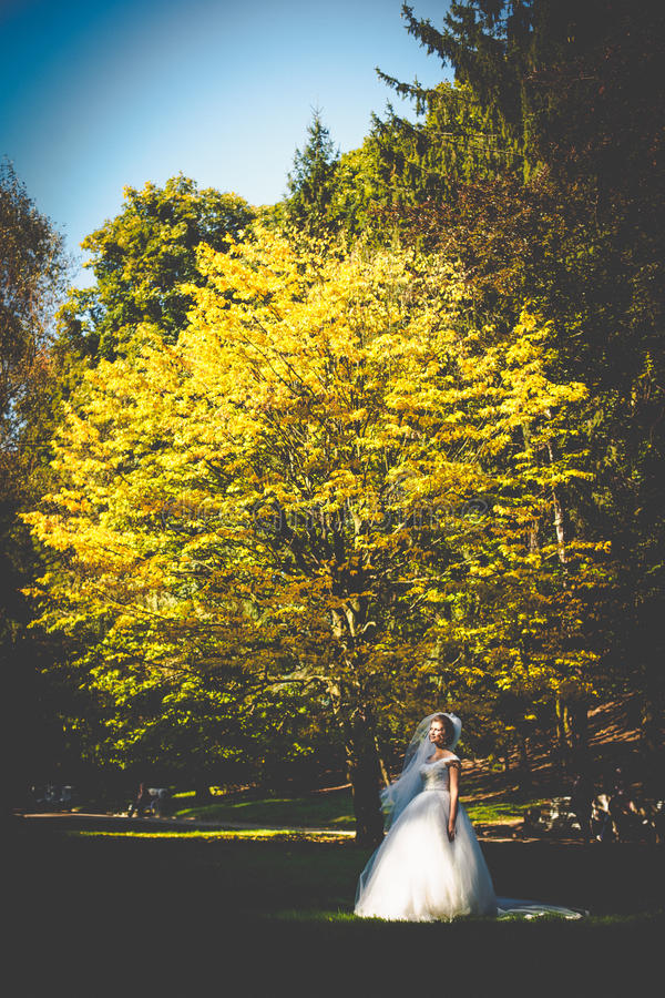 Noiva à moda feliz bonita no fundo de t bonito imagem de stock royalty free