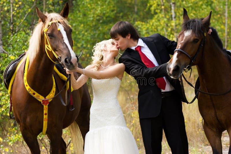 Noiva e noivo com cavalos imagem de stock