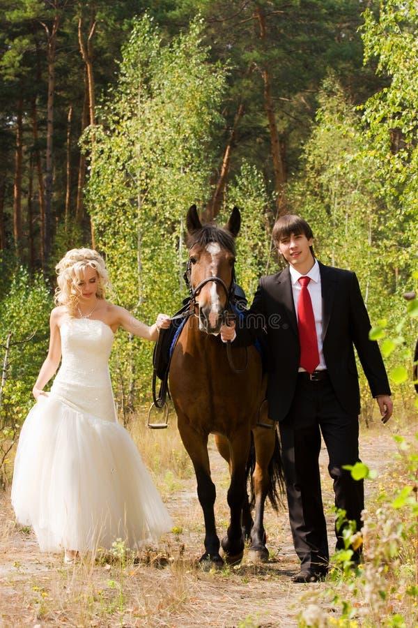 Noiva e noivo com cavalos imagens de stock royalty free