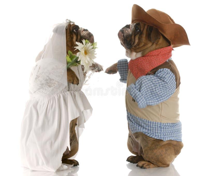Noiva e noivo do cão fotografia de stock