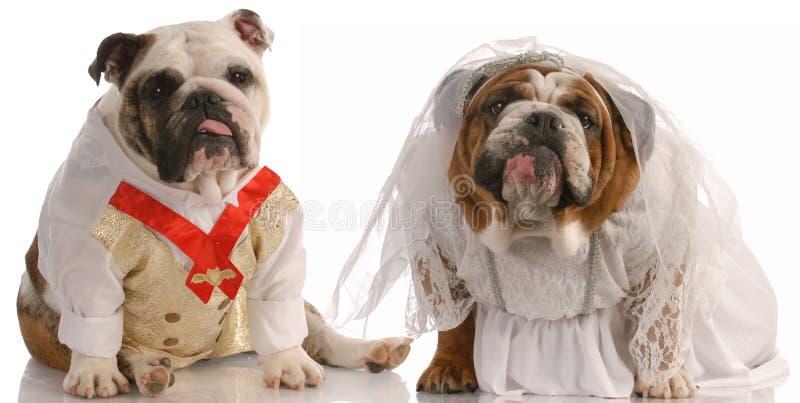 Noiva e noivo do cão imagens de stock
