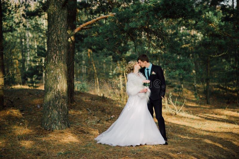 Noiva e noivo em um beijo do parque os noivos dos recém-casados dos pares em um casamento na floresta do verde da natureza estão  foto de stock
