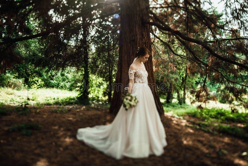 A noiva impressionante no vestido elegante levanta no parque verde imagens de stock