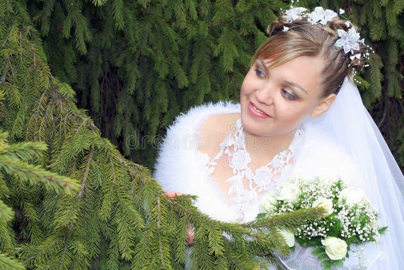 Noiva que procura o noivo fotografia de stock