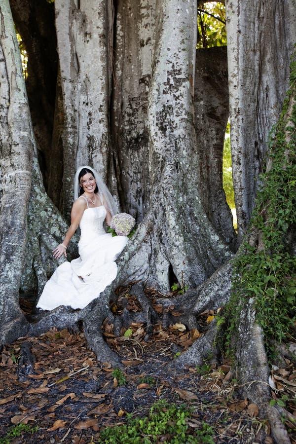 Noiva que senta-se sob a árvore imagens de stock