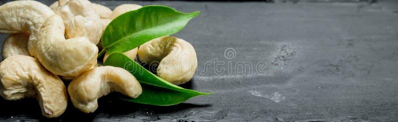 Noix de cajou avec des feuilles photos libres de droits