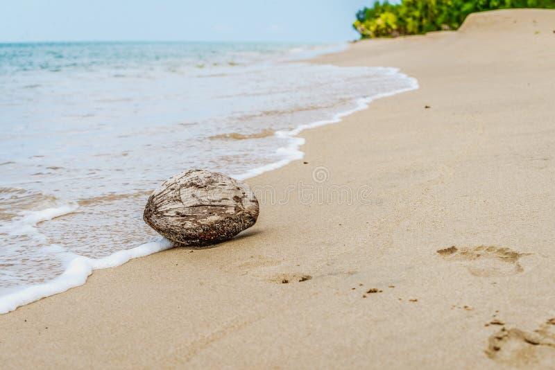Noix de coco à la plage avec éclabousser des vagues photographie stock