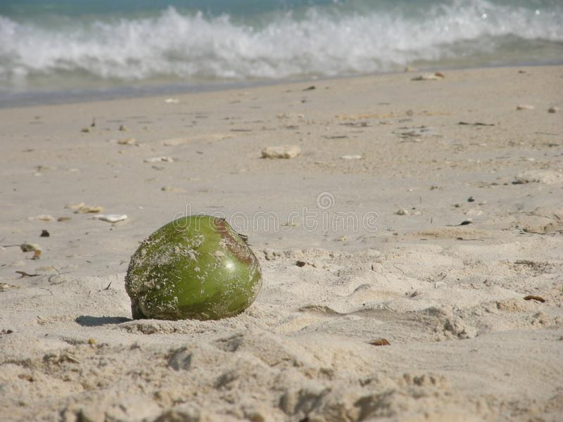 Noix de coco à la plage en plage blanche, île de Baru, Colombie images libres de droits