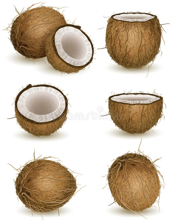Noix de coco illustration de vecteur