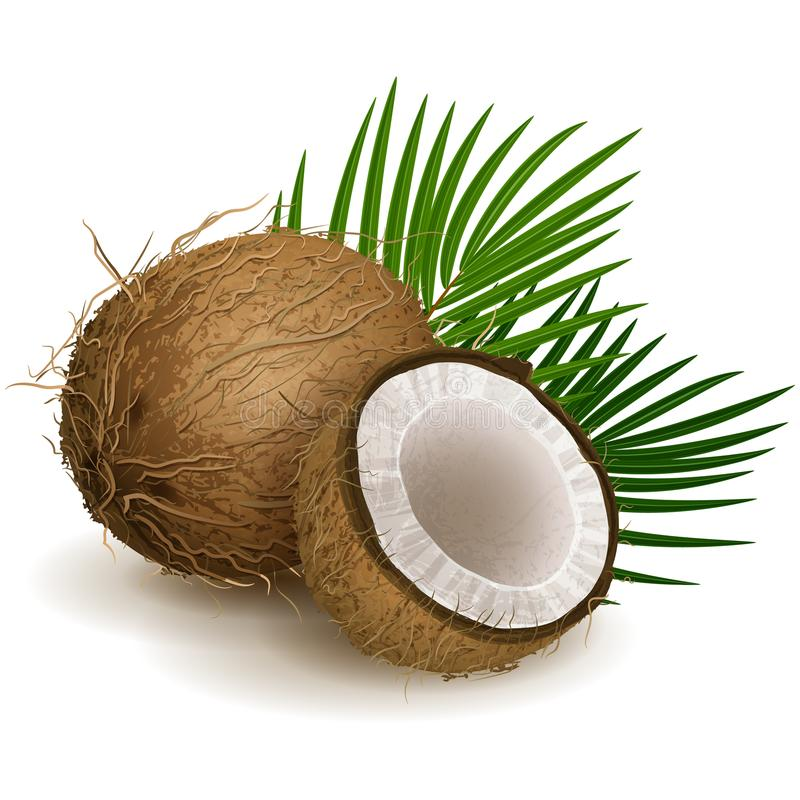 Noix de coco illustration stock