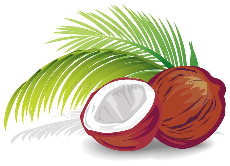 Noix de coco illustration libre de droits