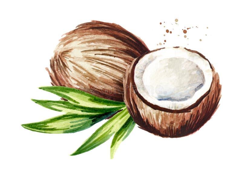 Noix de coco avec des feuilles de moitié et de vert Illust tiré par la main d'aquarelle illustration libre de droits