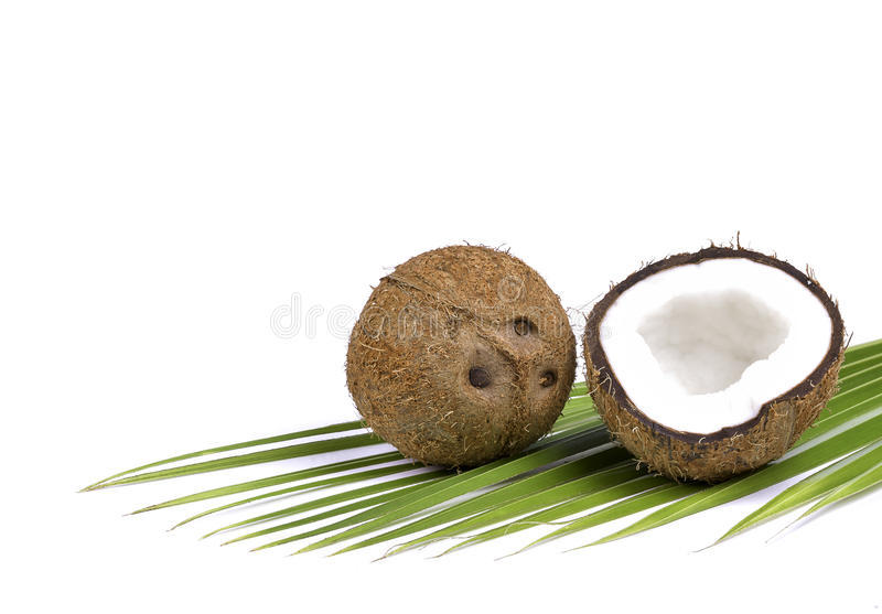 Noix de coco avec des palmettes images stock