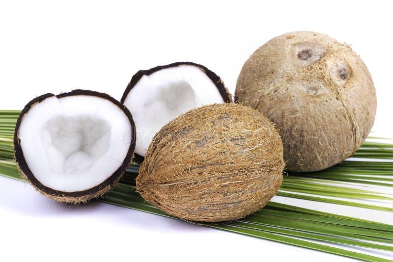 Noix de coco avec des palmettes image libre de droits