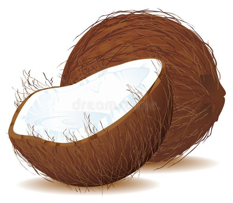Noix de coco avec du lait illustration libre de droits