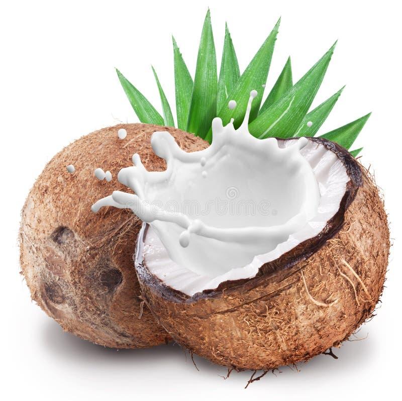 Noix de coco avec l'éclaboussure de lait à l'intérieur photos stock