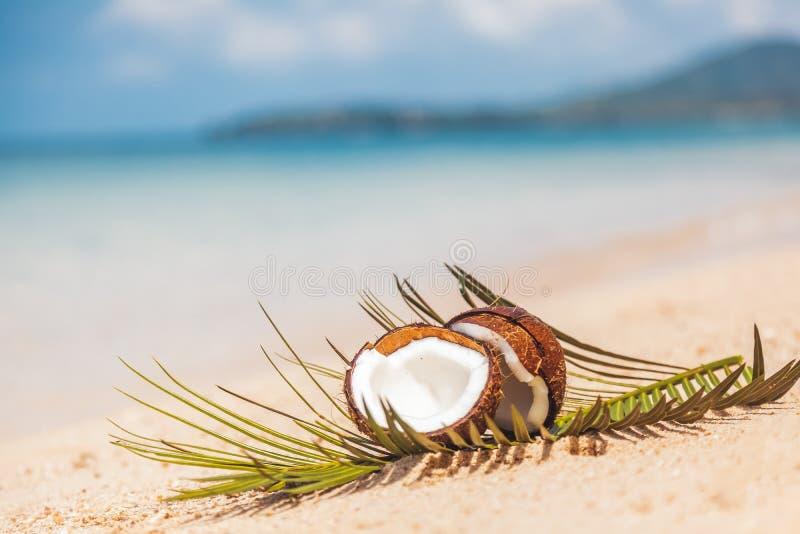 Noix de coco brisée dans le sable sur le rivage d'une mer tropicale chaude, photo stock