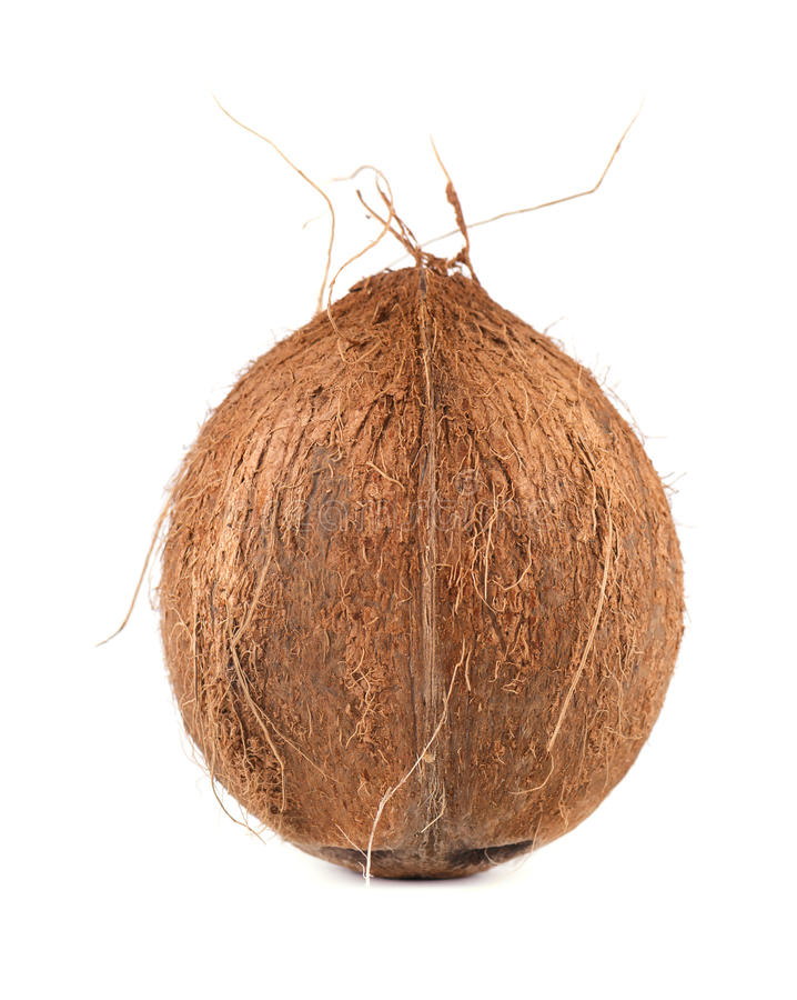 Noix de coco de fruit tropical Noix de coco fra?che d'isolement sur le fond blanc photo stock