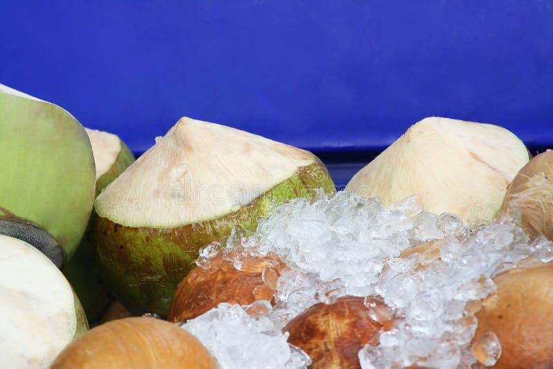 Noix de coco fraîches sur le seau en plastique bleu image stock