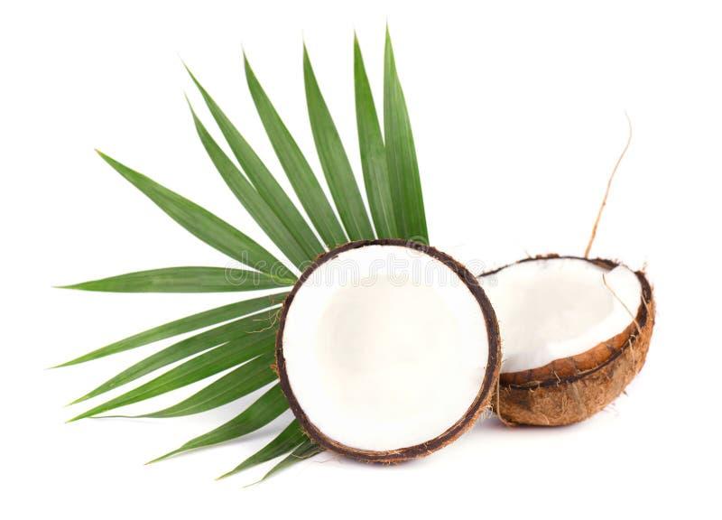 Noix de coco de fruit tropical Noix de coco fraîche avec des feuilles d'isolement sur le fond blanc photos libres de droits