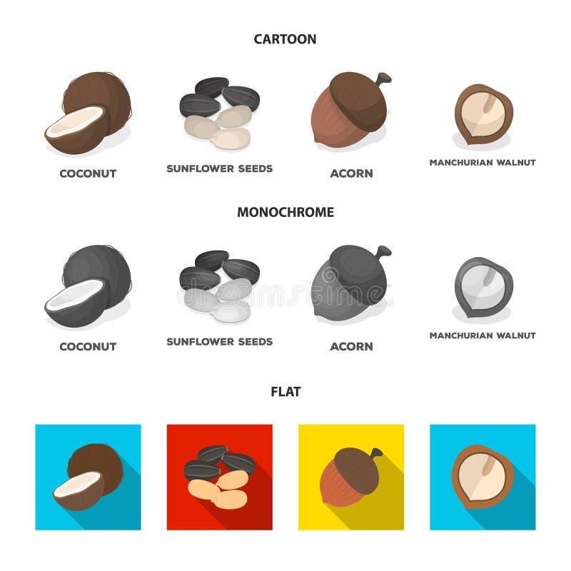 Noix de coco, gland, graines de tournesol, noix manchueian Différents genres d'icônes réglées de collection d'écrous dans la band illustration libre de droits