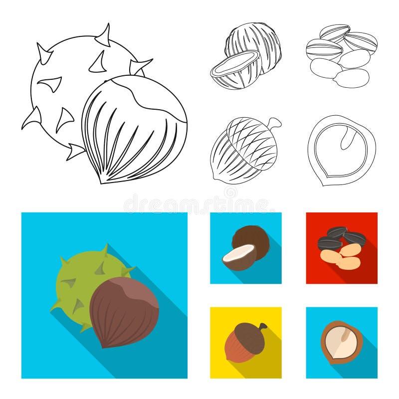 Noix de coco, gland, graines de tournesol, noix manchueian Différents genres d'icônes réglées de collection d'écrous dans le cont illustration de vecteur
