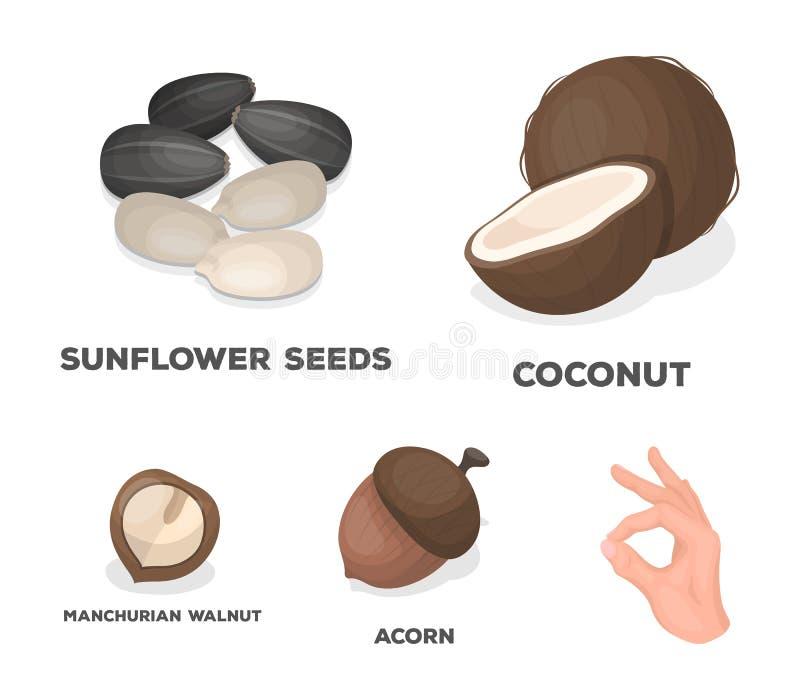 Noix de coco, gland, graines de tournesol, noix manchueian Différents genres d'icônes réglées de collection d'écrous dans le vect illustration de vecteur