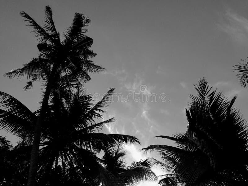 Noix de coco noire de blanc d'amd photographie stock libre de droits