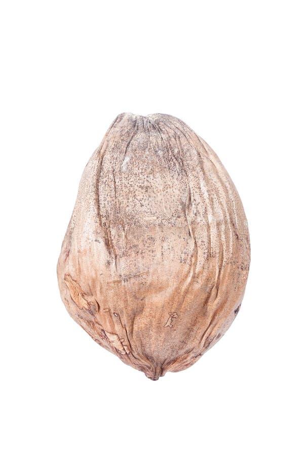 Noix de coco sèche images stock