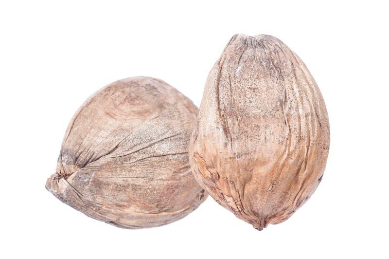 Noix de coco sèche images libres de droits
