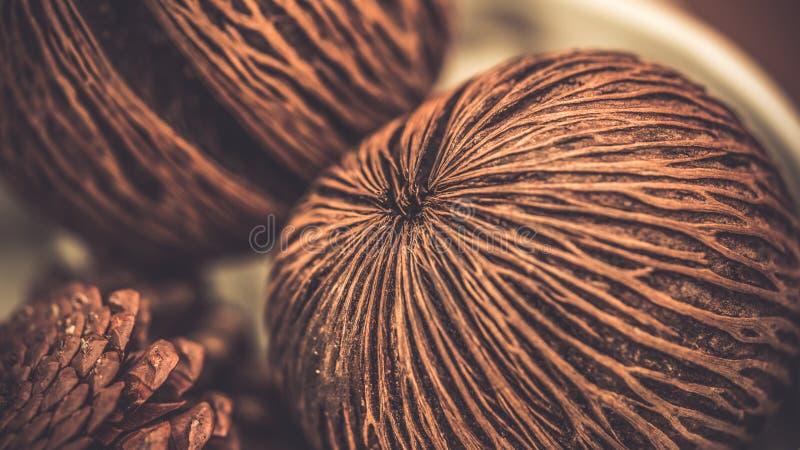 Noix de coco sèche Shell Healthy Food images stock