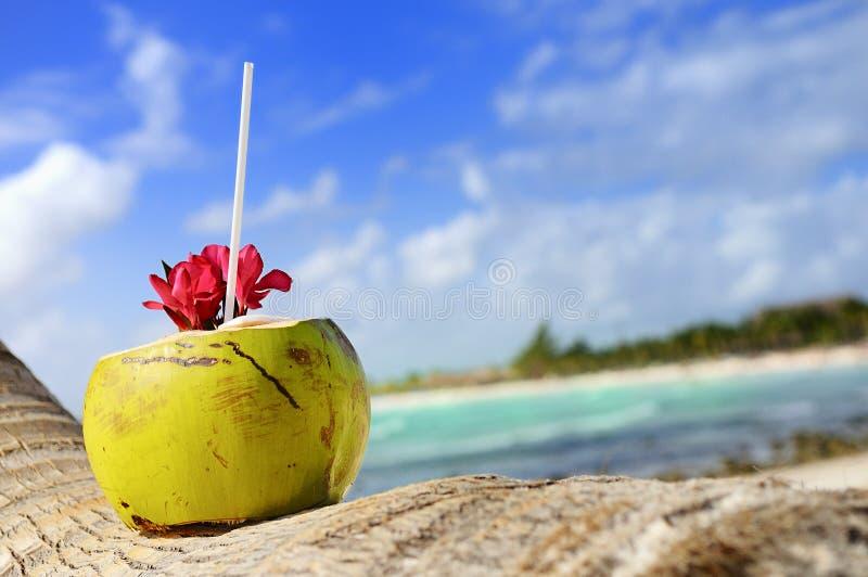 Noix de coco sur la plage photos libres de droits