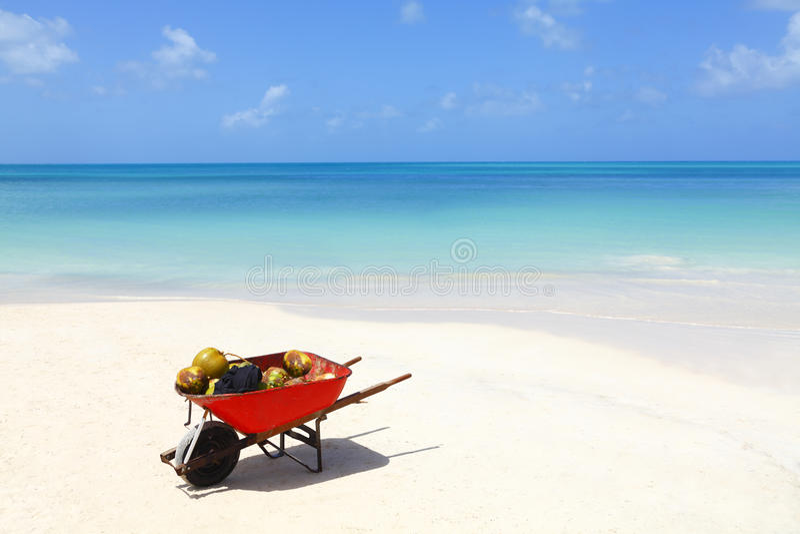 Noix De Coco Sur La Plage Des Caraïbes Tropicale Photos stock