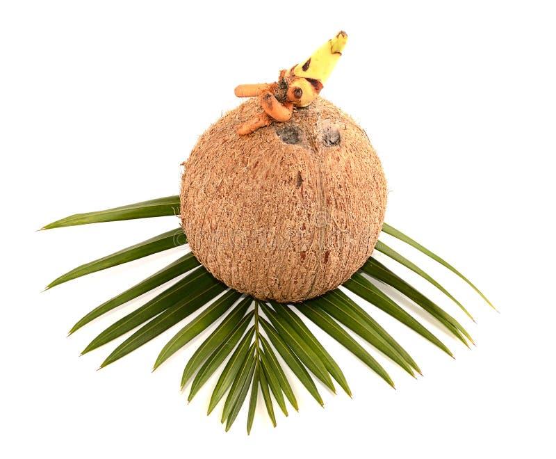 Noix de coco sur le fond blanc image stock