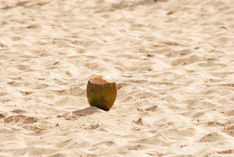 Noix de coco sur le sable en République Dominicaine  image libre de droits