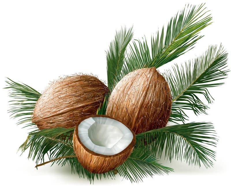 Noix de coco sur palmettes illustration libre de droits