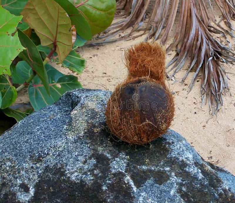Noix de coco sur une plage tropicale images libres de droits