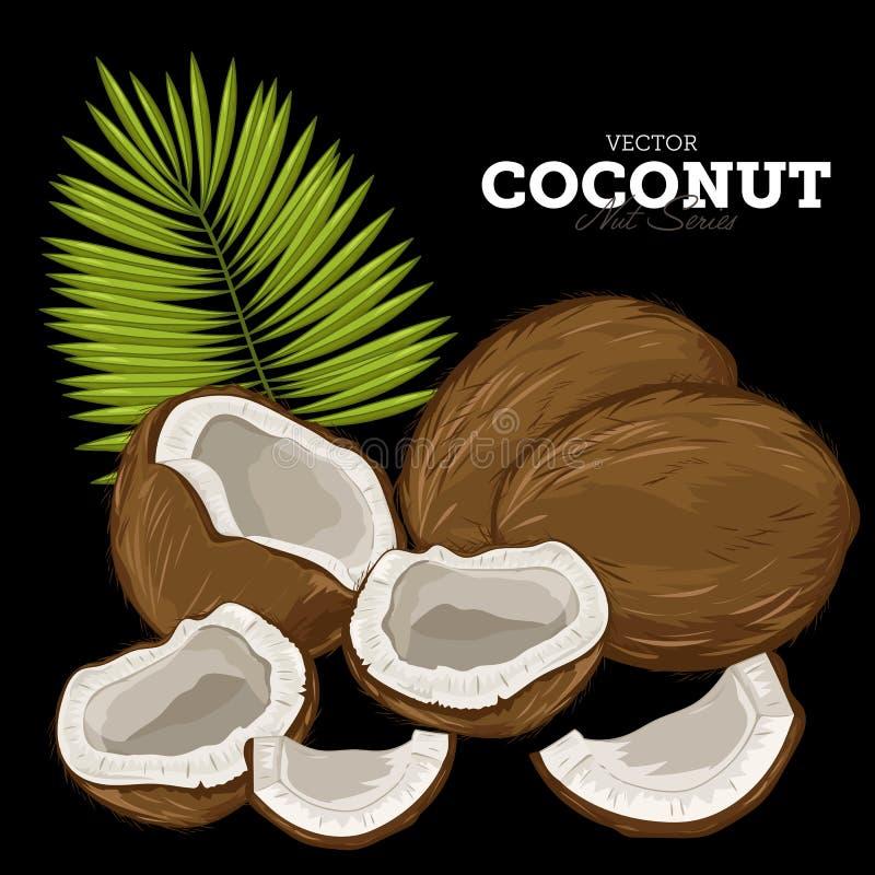 Noix de coco, vecteur illustration libre de droits