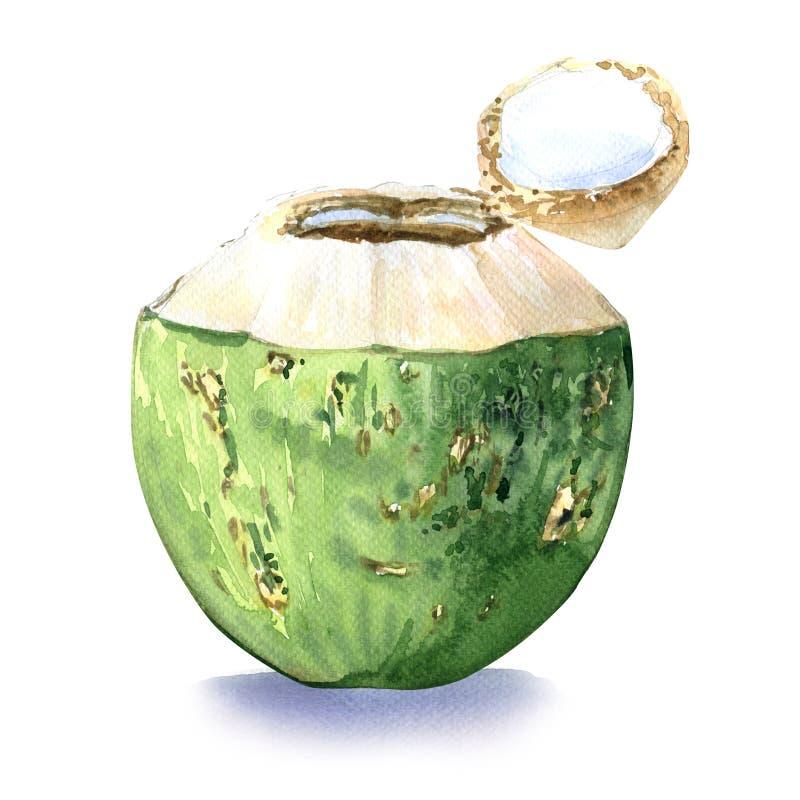 Noix de coco verte, boisson de l'eau illustration de vecteur