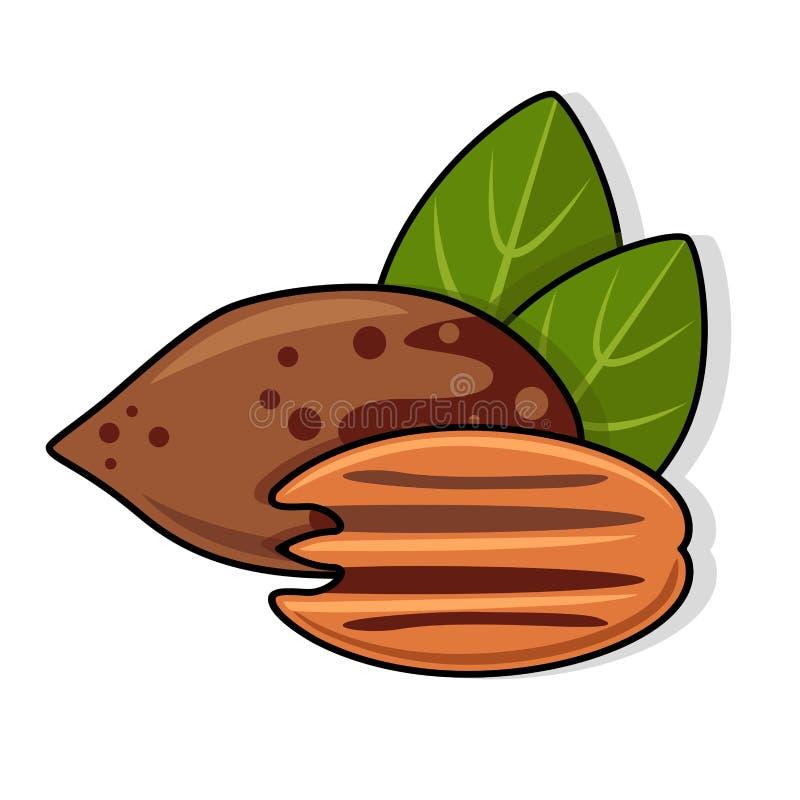 Noix de pécan avec des feuilles illustration libre de droits