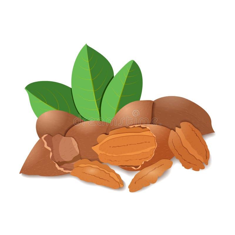 Noix de pécan d'illustration de vecteur Une poignée de noix de pécan écossées dans la coquille et, feuilles Image savoureuse sur  illustration de vecteur